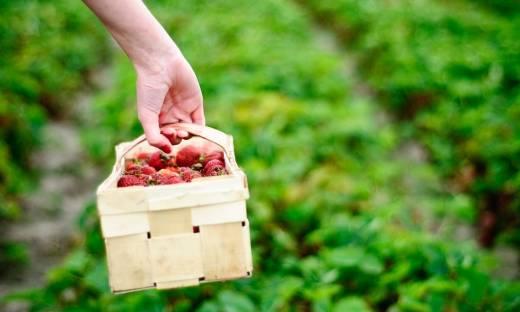 Pora na Pola widzi szansę na rozwój. Dostawy produktów od rolników w nowym modelu