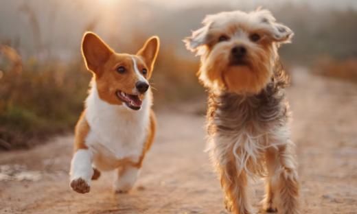 Podatek od psa w 2022. Czy takie opłaty są konieczne?