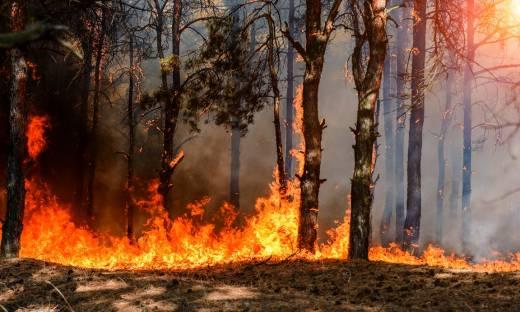 4 miliony na system detekcji pożarów. Polska firma z pieniędzmi od inwestorów