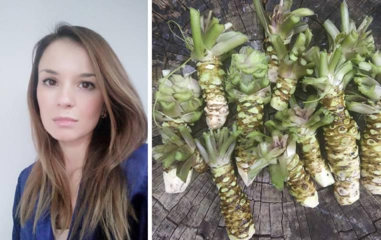 Wasabi nad Wisłą. Najdroższe warzywo świata uprawiane jest w Polsce