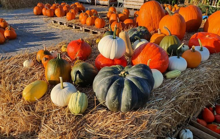 Jesień bardzo biznesowa. Jak zarabiać na porach roku?