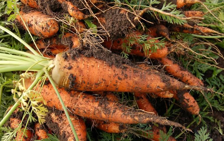 """Walczą z wyrzucaniem jedzenia, sprzedając """"niedoskonałe warzywa"""". Wojna Warzyw odniesie sukces?"""