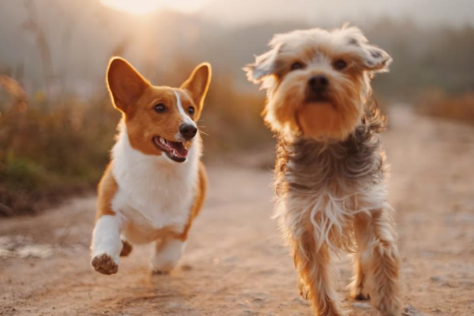 Podatek od psa to nic przyjemnego / Fot. Alvan Nee